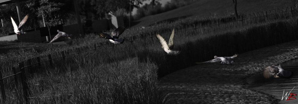 birdie-takeoff-bw
