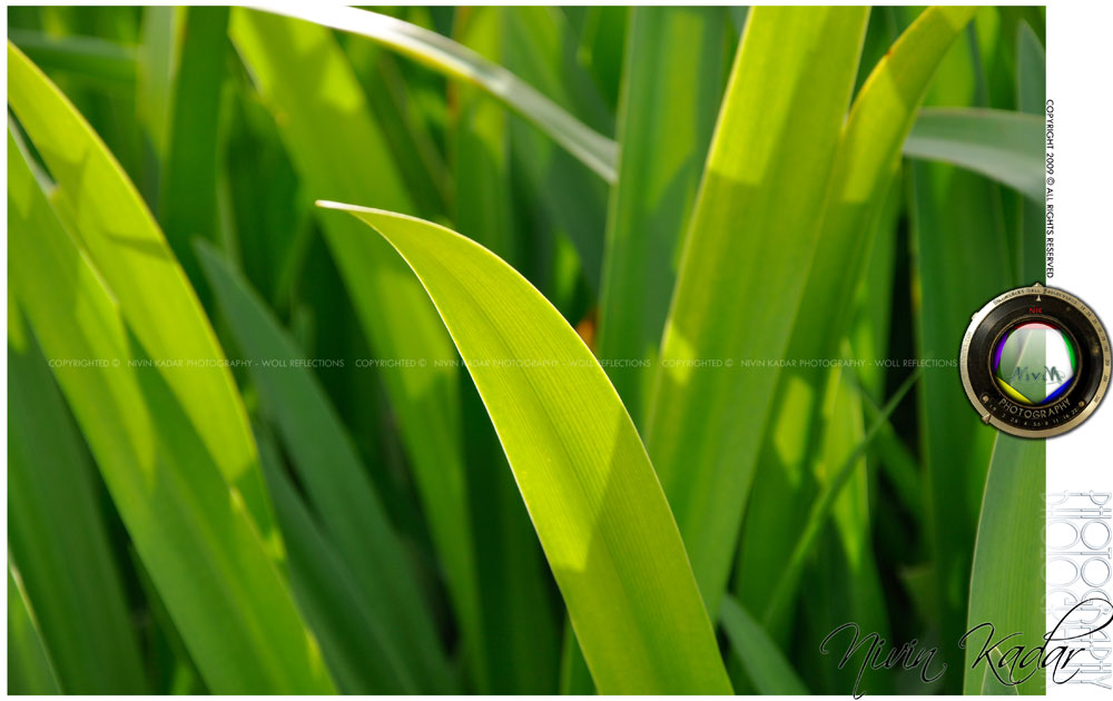 leafcopy