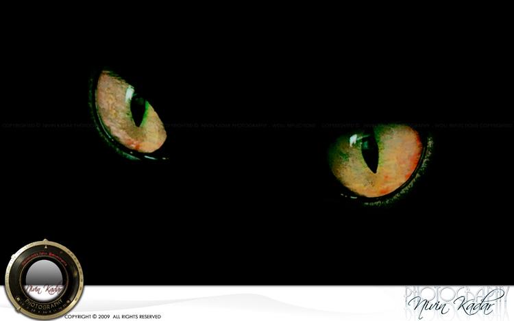 Devils-Eyes