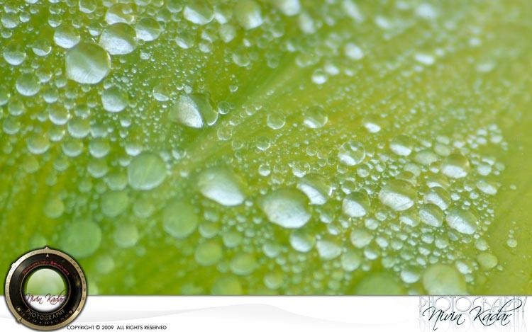 Dew-on-leaf
