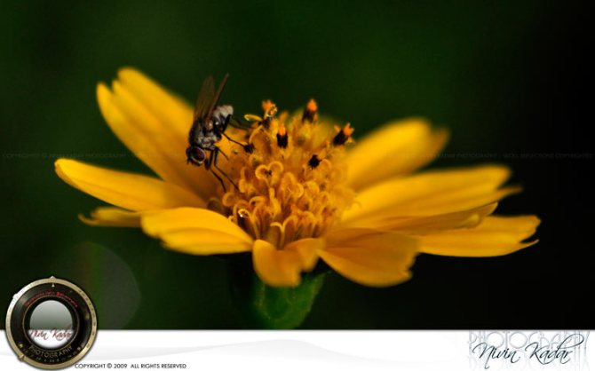 Flo-n-Bee