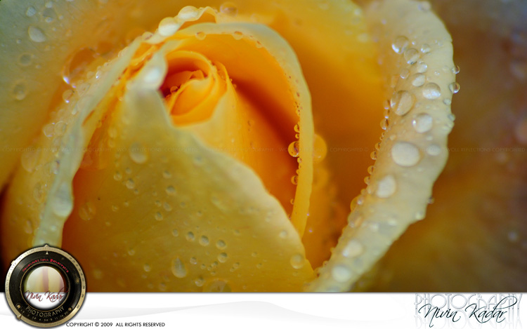 Rose-Garden12