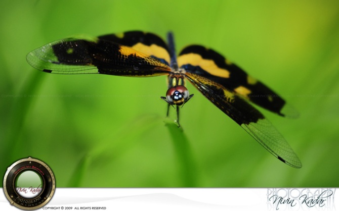 Damselfly-Smiling
