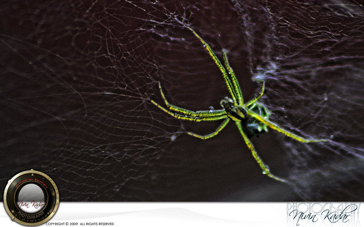 Green-spider