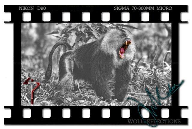 4tp-monkey