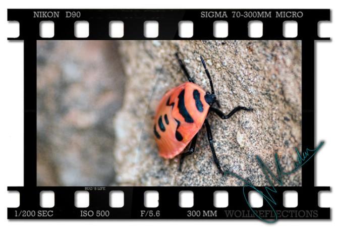 Bug's-life