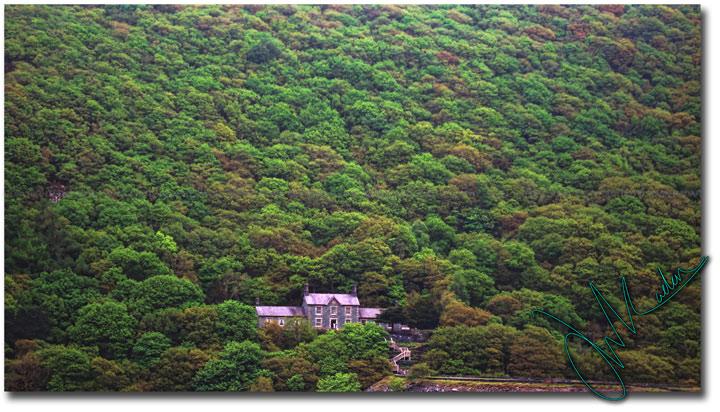 Fall-foliage-Landscape1