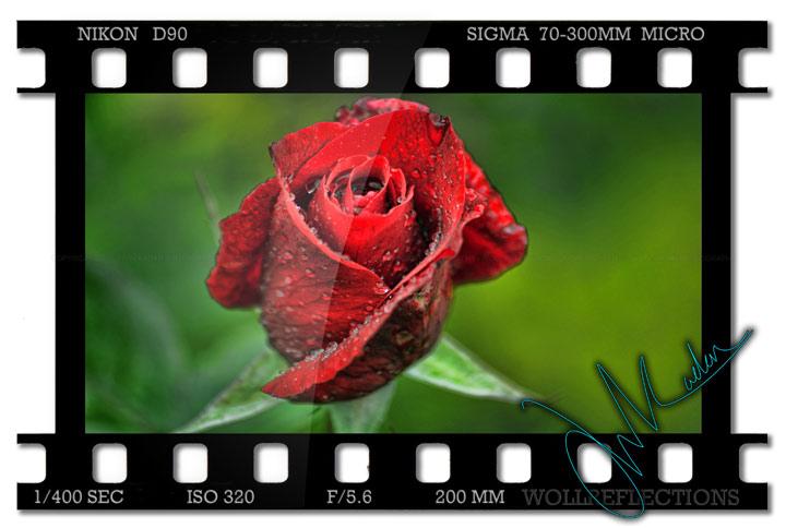 roseHDR