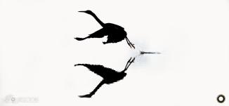 Great Billed heron